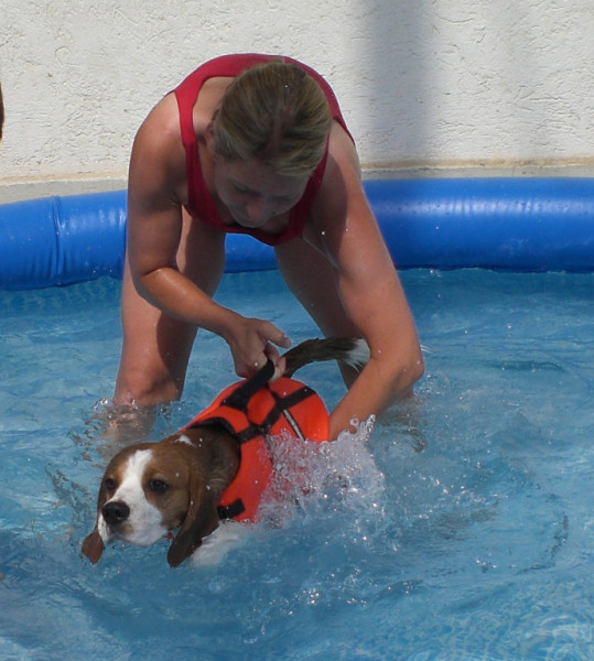 Wo Kann Man Mit Hunden Schwimmen Gehen